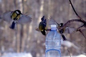 Активисты движения «ДЕЛАЕМ ДОБРО ВМЕСТЕ» провели мастер-класс по изготовлению кормушек для птиц